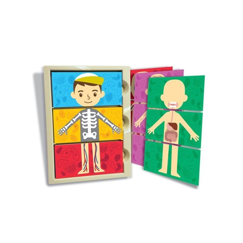 Set anatomía del cuerpo 4M