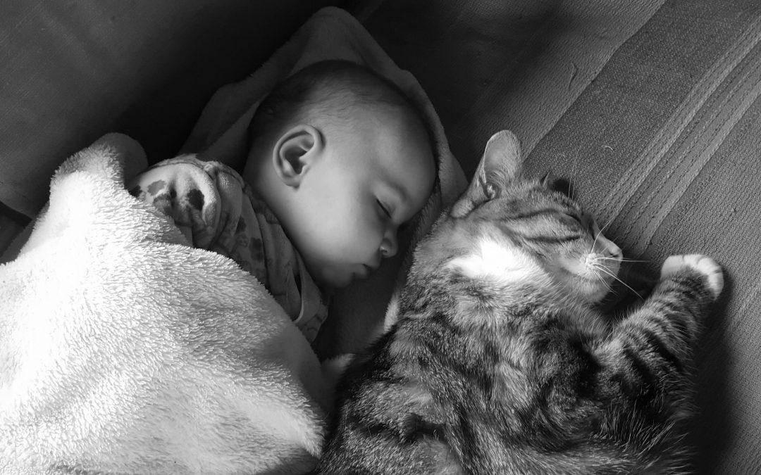 La importancia de los animales en el desarrollo del niño/a